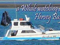 A Whale watching at Hervey Bay